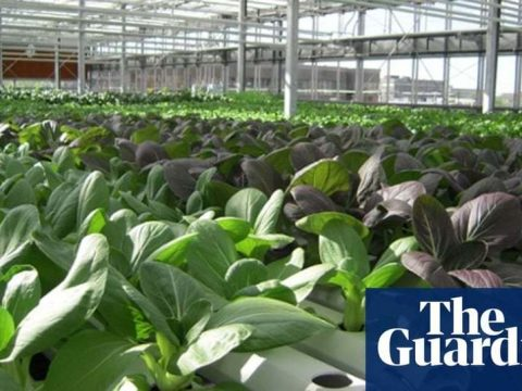 , Next-gen urban farms: 10 innovative projects from around the world | Guardian sustainable business | The Guardian, The Circular Economy