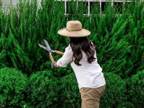 , 4 Tips For Sustainable Lawn Care, The Circular Economy
