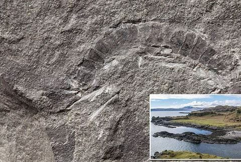 , World's oldest 'bug' is a fossilized 425-million-year-old millipede discovered on a Scottish Island | Daily, The Circular Economy, The Circular Economy
