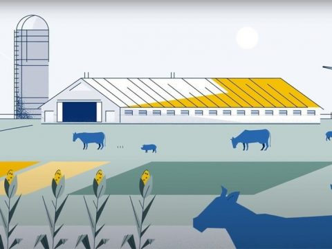 , Tyson Foods releases 2019 Sustainability Report, The Circular Economy, The Circular Economy