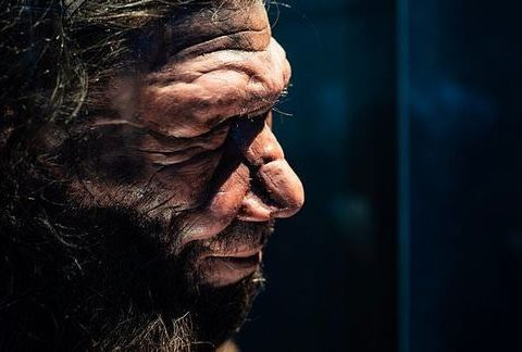 , Scientists grow 'mini brains' from human stem cells containing Neanderthal DNA | Daily, The Circular Economy, The Circular Economy