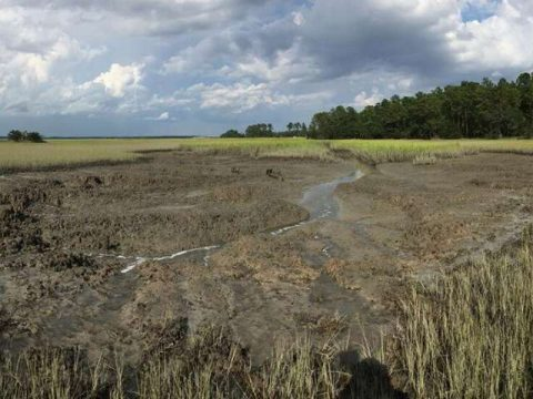 , New Study Finds Sea Level Rise and Marsh Crabs are Reshaping Salt Marshes – Engineering School of Sustainable Infrastructure & Environment, The Circular Economy