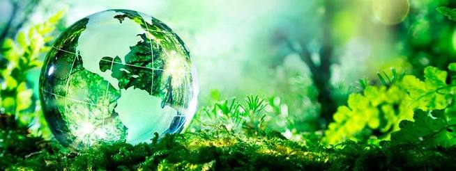 , What is the future of sustainability? | Holistic Fish, The Circular Economy