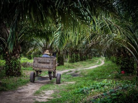 , Jurisdictional Approaches to Sustainability in the Tropics | Frontiers Research Topic, The Circular Economy