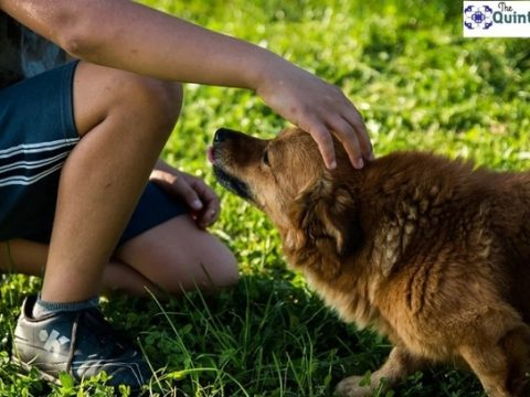 , Best Ways to Home Train Your Dog, The Circular Economy