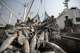 , Joint position paper: strengthening the evaluation process of Sustainable Fisheries Partnership Agreements | WWF, The Circular Economy