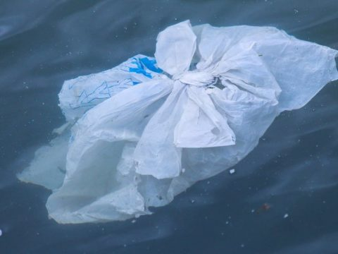 , Canada is Banning Single-Use Plastic Bags, Straws, and Cutlery Next Year, The Circular Economy