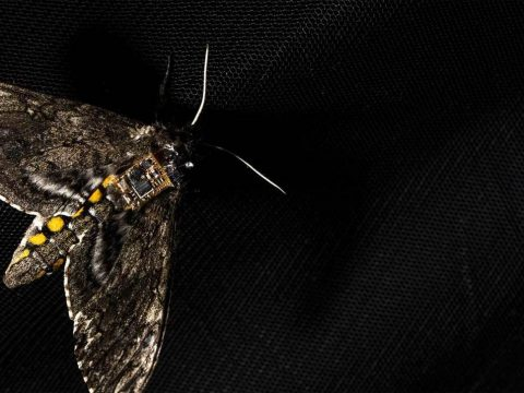 , Researchers harness moths to drop sensors from the sky, The Circular Economy