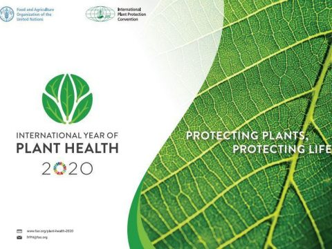 , Celebrating the FAO International Year of Plant Health: A forward looking perspective on tackling the grand challenges in plant health to transform agriculture sustainably. | CambPlants Hub, The Circular Economy