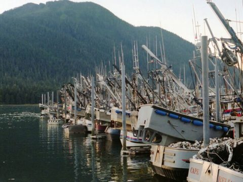 , Commercial Fishing, Sustainability and Environmental Impact –, The Circular Economy