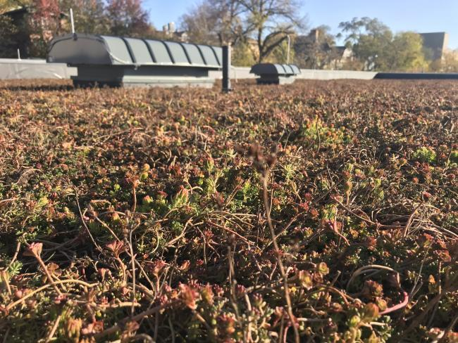 , GRCC's new green roof reflects continued commitment to sustainability | Grand Rapids Community College, The Circular Economy