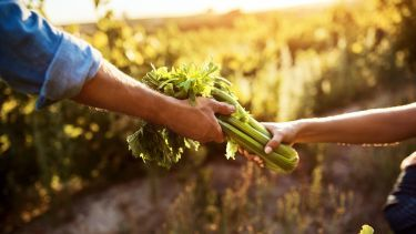, Local food organisation partnerships | Institute for Sustainable Food | The University of Sheffield, The Circular Economy