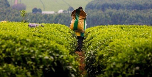 , Kenya: building a sustainable future | Turner & Townsend, The Circular Economy