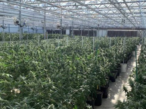 , How the Cannabis Industry Can Address Sustainability Concerns, The Circular Economy