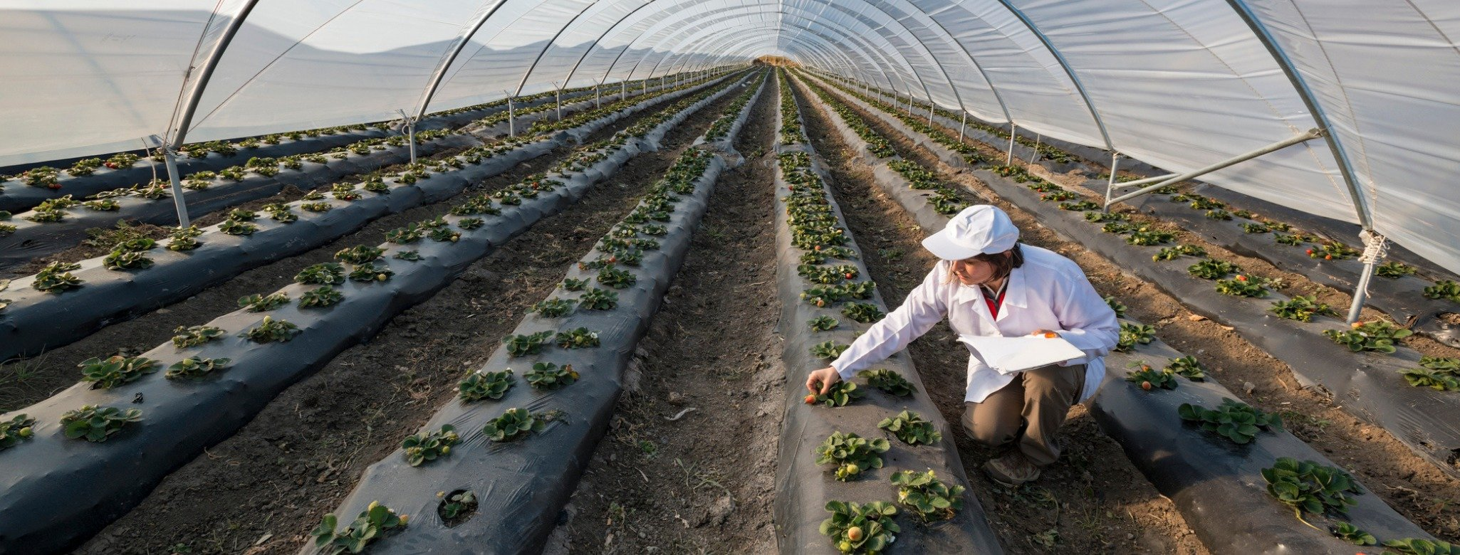, Sustainable Food Tastes Better – How we got there, The Circular Economy