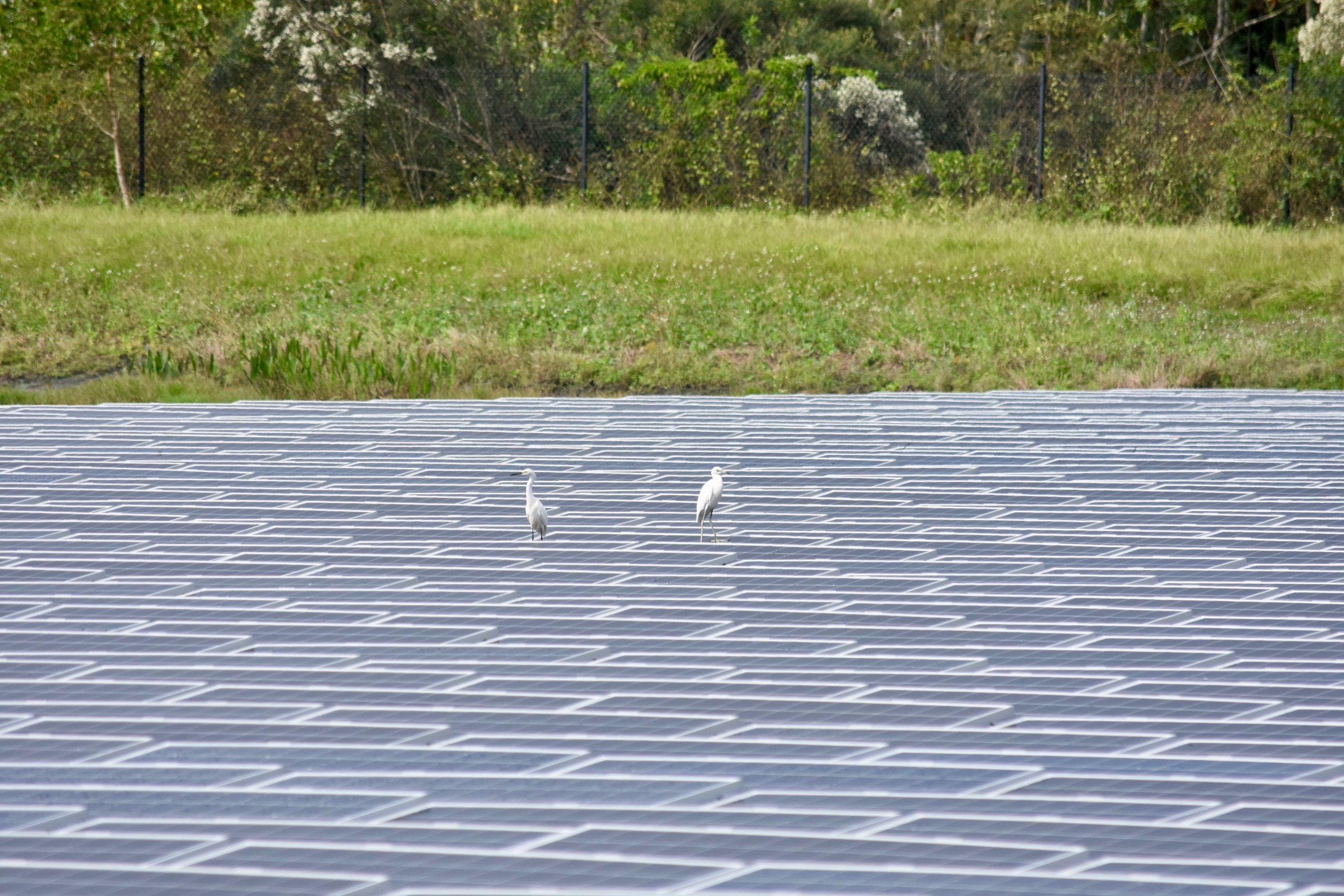 , Roadmap to Renewables Unites Climate and Sustainability Goals, The Circular Economy